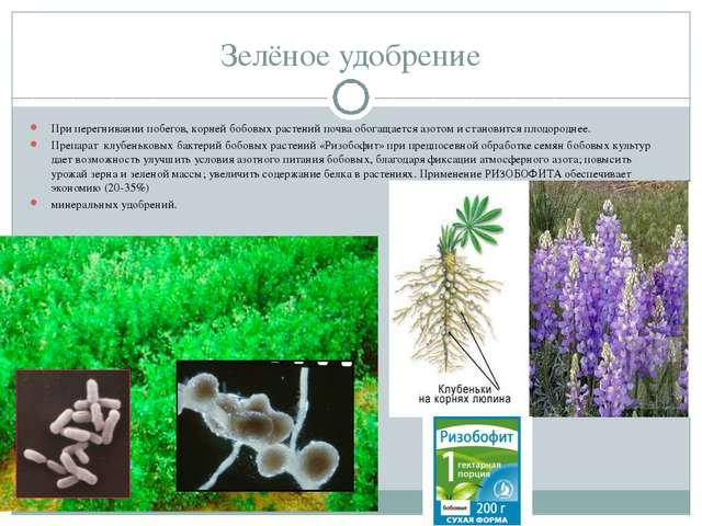 Зелёное удобрение При перегнивании побегов, корней бобовых растений почва обо...