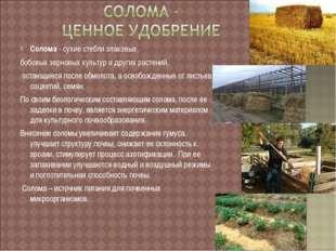 Солома - сухие стебли злаковых, бобовых зерновых культур и других растений, о