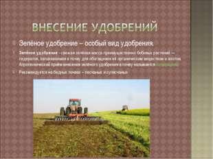 Зелёное удобрение – особый вид удобрения. Зелёное удобрение - свежая зелёная