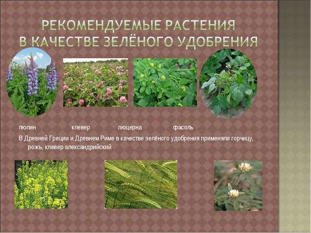 люпин клевер люцерна фасоль В Древней Греции и Древнем Риме в качестве зелён...