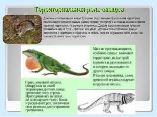 Территориальная роль самцов Домовые и лесные мыши живут большими родственными