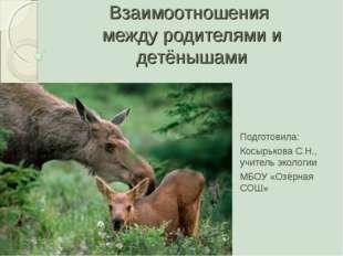 Взаимоотношения между родителями и детёнышами Подготовила: Косырькова С.Н., у