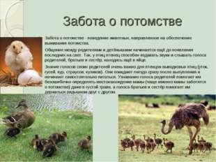 Забота о потомстве Забота о потомстве - поведение животных, направленное на о