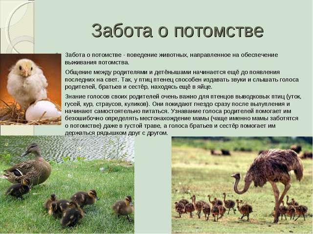 Забота о потомстве Забота о потомстве - поведение животных, направленное на о...