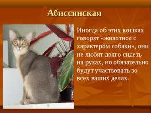 Абиссинская Иногда об этих кошках говорят «животное с характером собаки», они