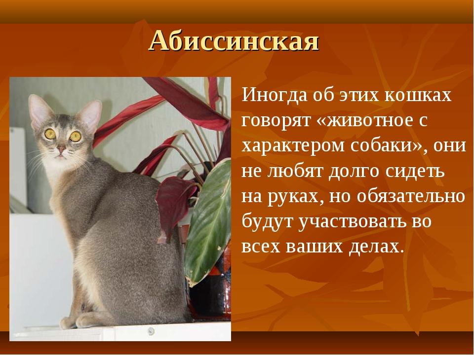 Абиссинская Иногда об этих кошках говорят «животное с характером собаки», они...