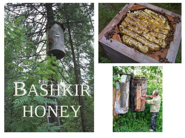 BASHKIR HONEY