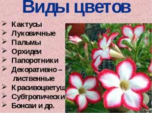 Виды цветов Кактусы Луковичные Пальмы Орхидеи Папоротники Декоративно – листв