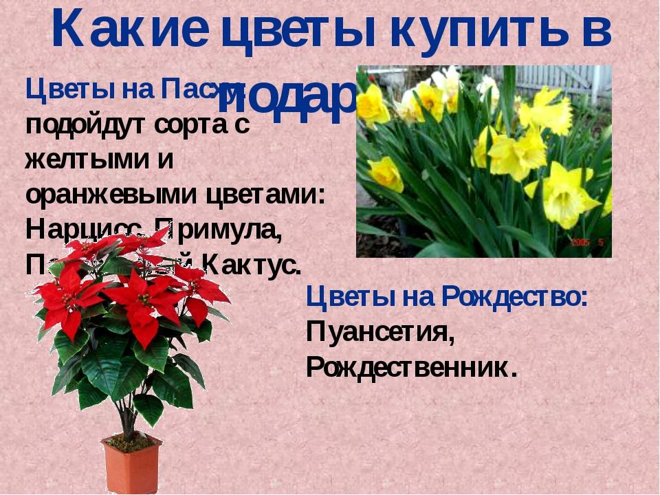 Цветы на Пасху: подойдут сорта с желтыми и оранжевыми цветами: Нарцисс, Приму...
