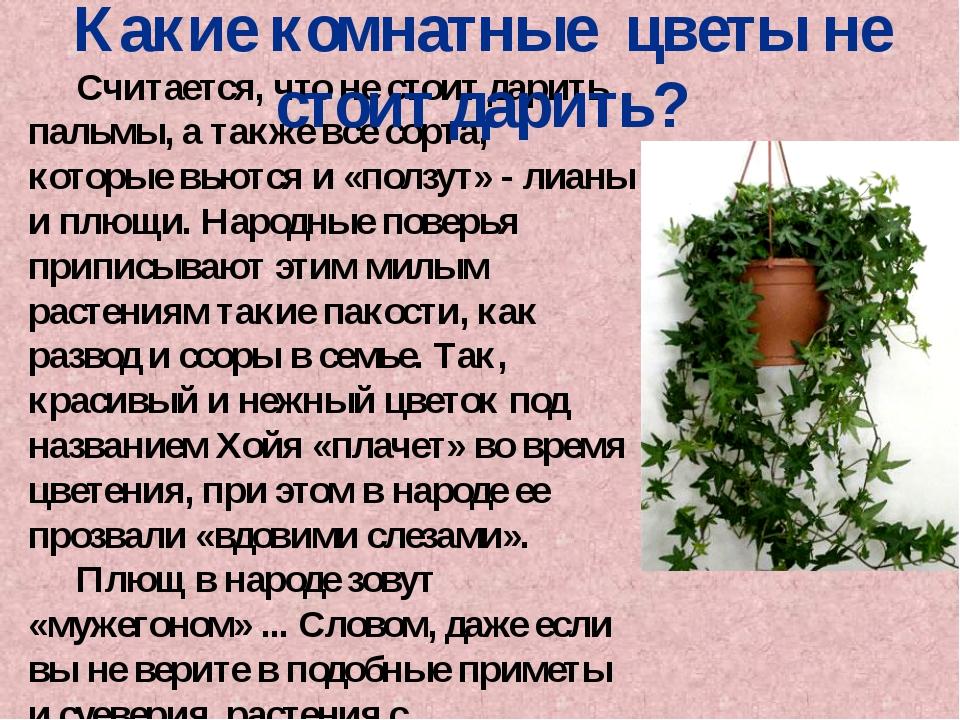 Считается, что не стоит дарить пальмы, а также все сорта, которые вьются и «...