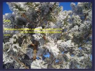 Зимой Когда… Заколдован невидимкой дремлет лес под сказку сна. Словно белою к