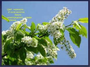 Цвет черемухи… И поле золотое. Земли нижегородской - самая глубинка.
