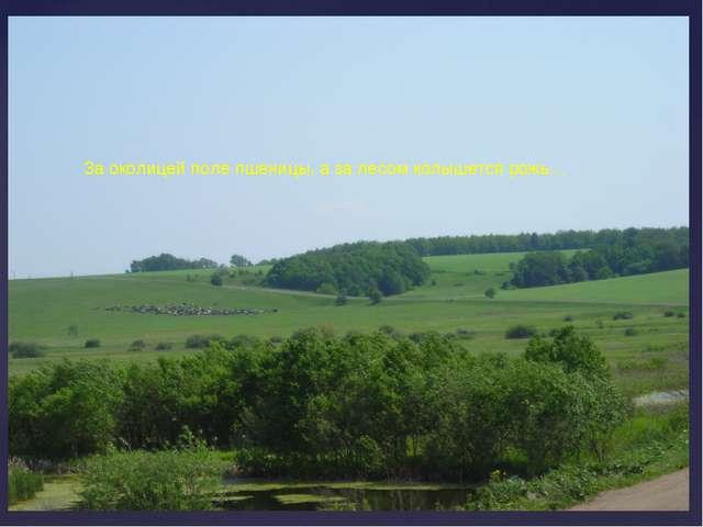 За околицей поле пшеницы, а за лесом колышется рожь…