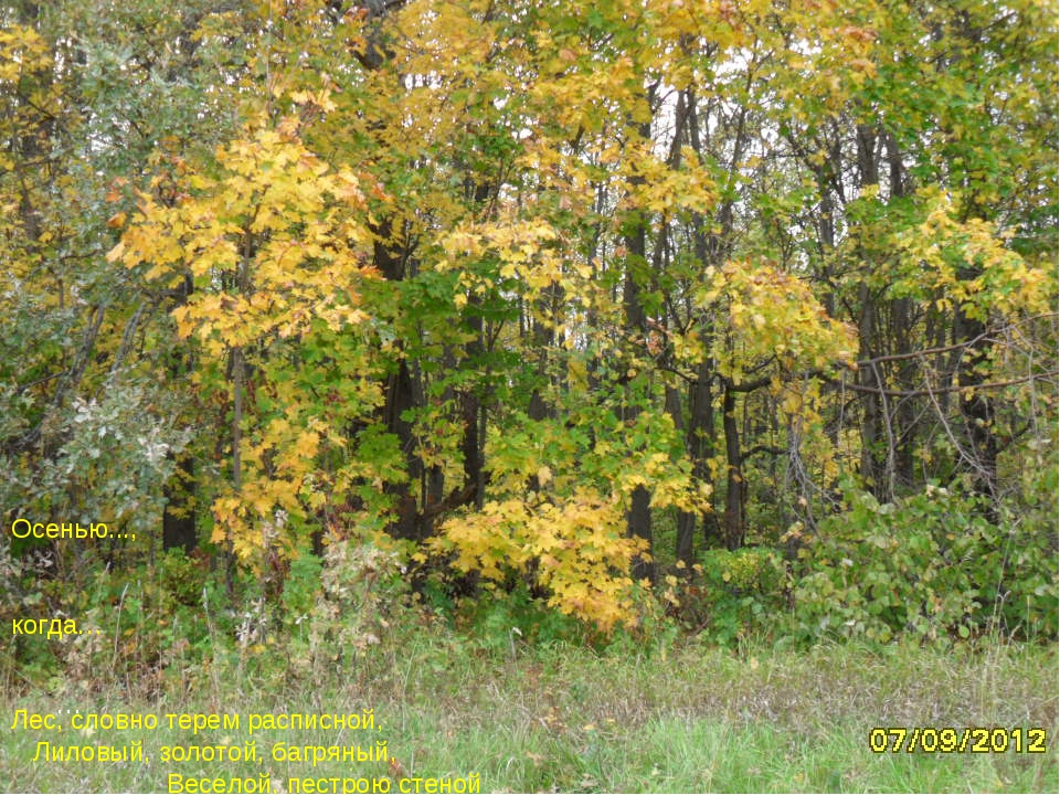 … Осенью..., когда… Лес, словно терем расписной, Лиловый, золотой, багряный,...