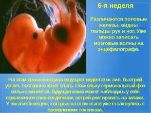 6-я неделя Различаются половые железы, видны пальцы рук и ног. Уже можно запи