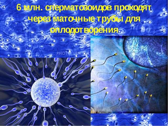 6 млн. сперматозоидов проходят через маточные трубы для оплодотворения