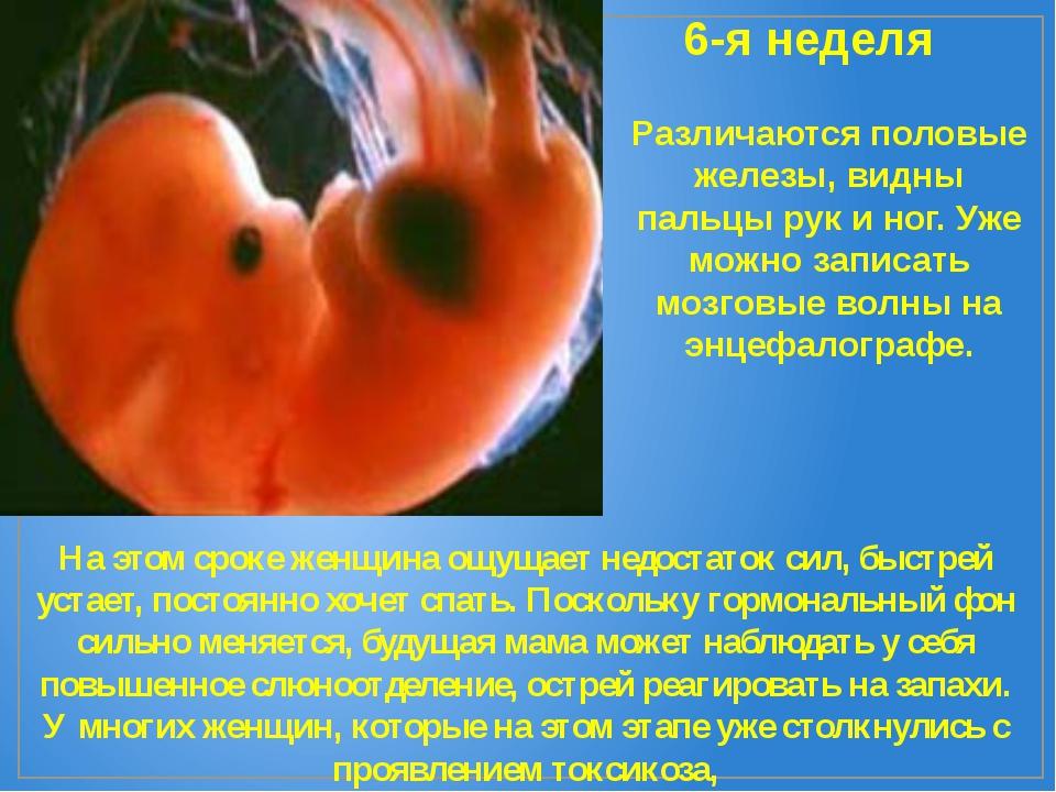 6-я неделя Различаются половые железы, видны пальцы рук и ног. Уже можно запи...