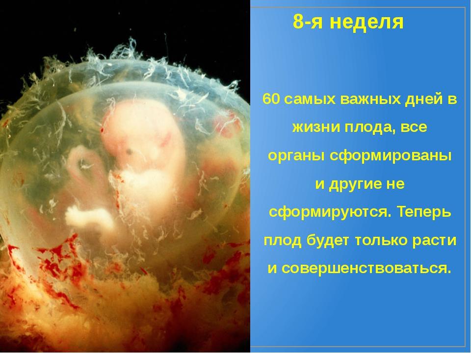 8-я неделя 60 самых важных дней в жизни плода, все органы сформированы и друг...