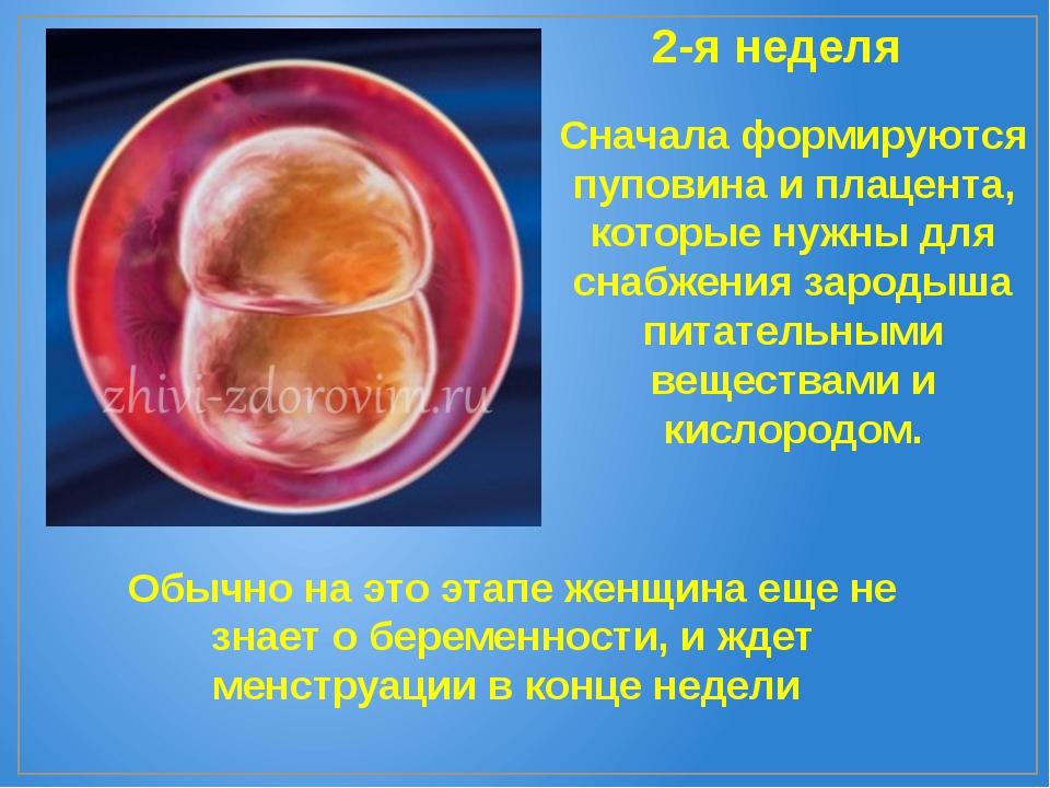 2-я неделя Сначала формируются пуповина и плацента, которые нужны для снабжен...