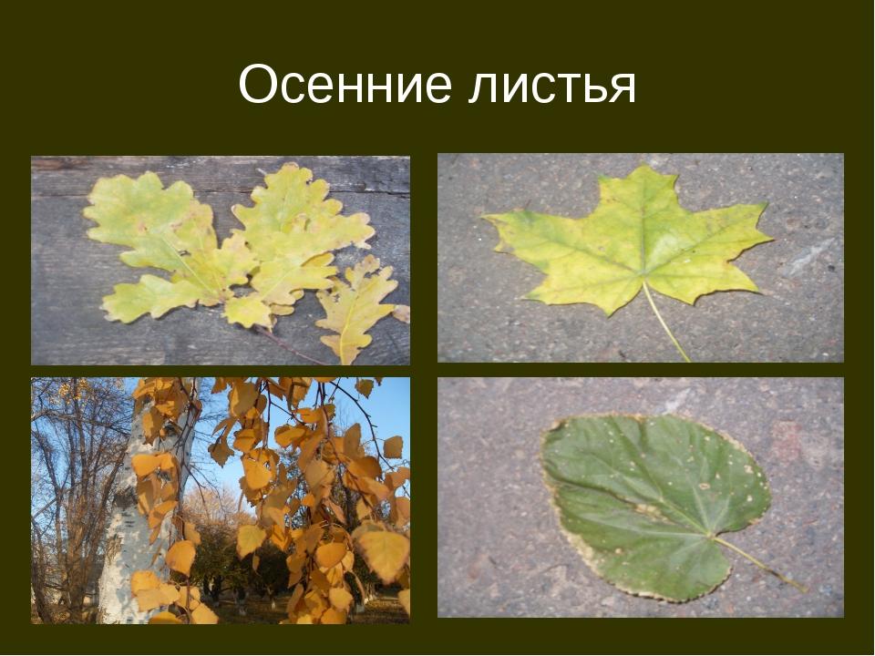 Осень Осенние листья