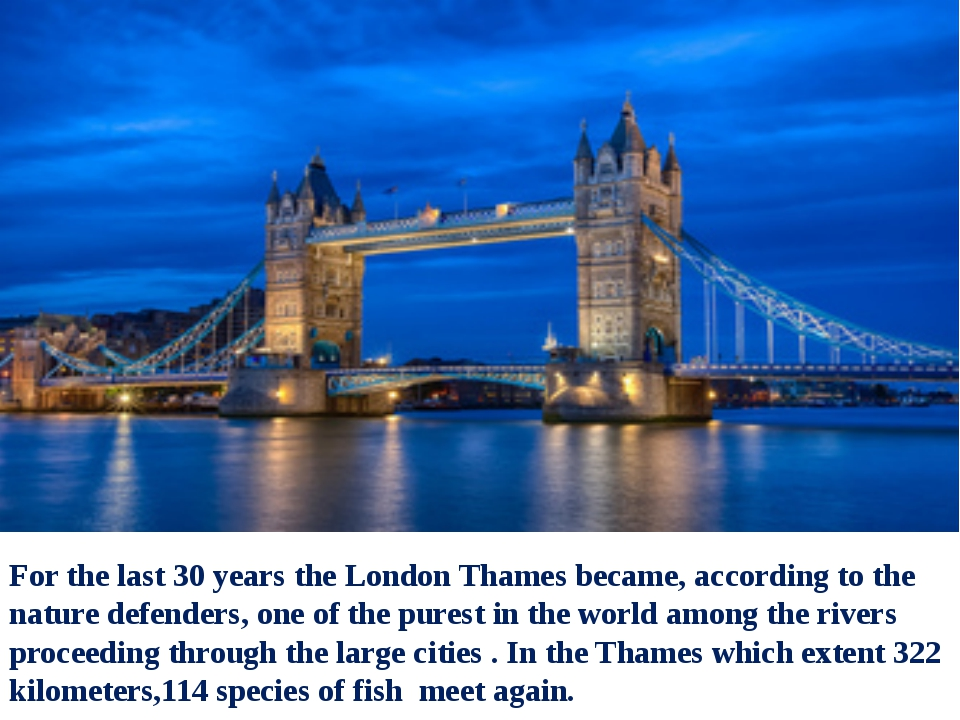 For the last 30 years the London Thames became, according to the nature defen...
