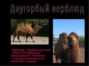 Верблюд - корабль пустыни - является символом выносливости, терпения и целеу