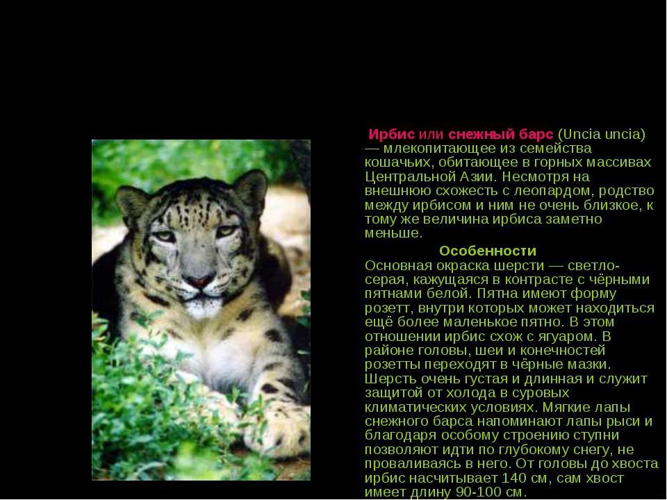 Ирбис или снежный барс (Uncia uncia) — млекопитающее из семейства кошачьих,...