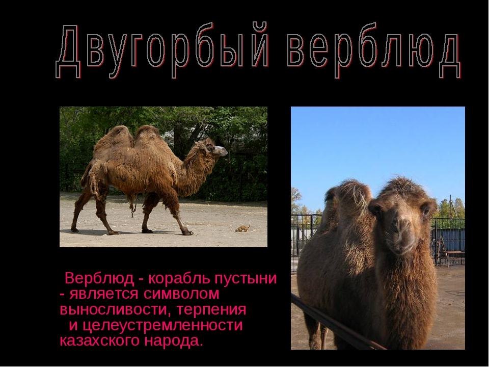 Верблюд - корабль пустыни - является символом выносливости, терпения и целеу...