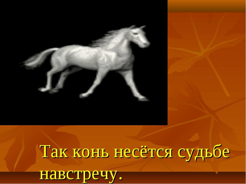 Так конь несётся судьбе навстречу.