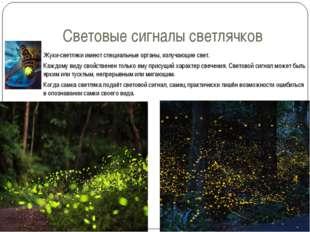 Световые сигналы светлячков Жуки-светляки имеют специальные органы, излучающи