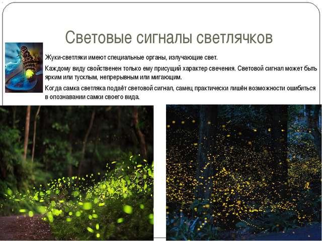Световые сигналы светлячков Жуки-светляки имеют специальные органы, излучающи...