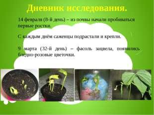 Дневник исследования. 14 февраля (8-й день) – из почвы начали пробиваться пер