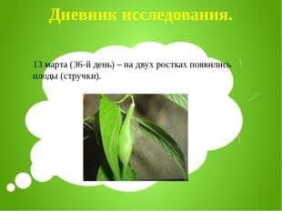 Дневник исследования. 13 марта (36-й день) – на двух ростках появились плоды