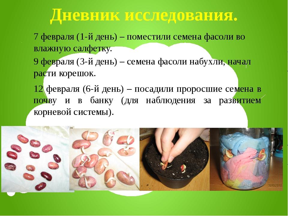 Дневник исследования. 7 февраля (1-й день) – поместили семена фасоли во влажн...