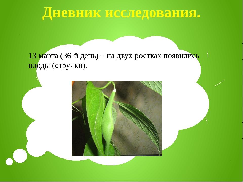 Дневник исследования. 13 марта (36-й день) – на двух ростках появились плоды...