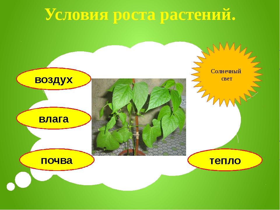Условия роста растений. воздух влага почва тепло Солнечный свет