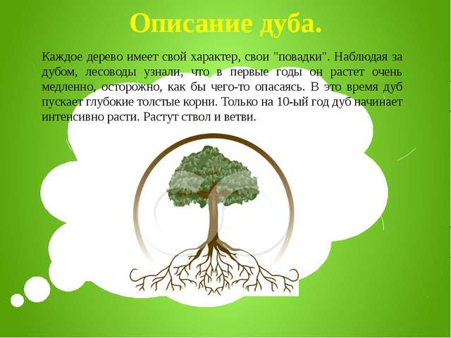 """Описание дуба. Каждое дерево имеет свой характер, свои """"повадки"""". Наблюдая за..."""