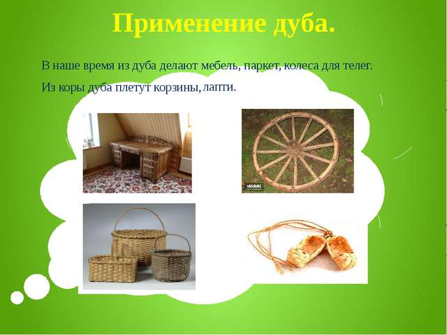 Применение дуба. В наше время из дуба делают мебель, паркет, Из коры дуба пле...