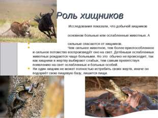 Роль хищников Исследования показали, что добычей хищников становятся в основн