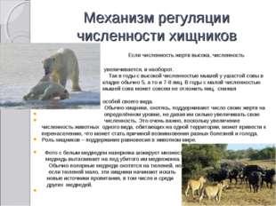 Механизм регуляции численности хищников Если численность жертв высока, числен