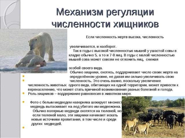 Механизм регуляции численности хищников Если численность жертв высока, числен...