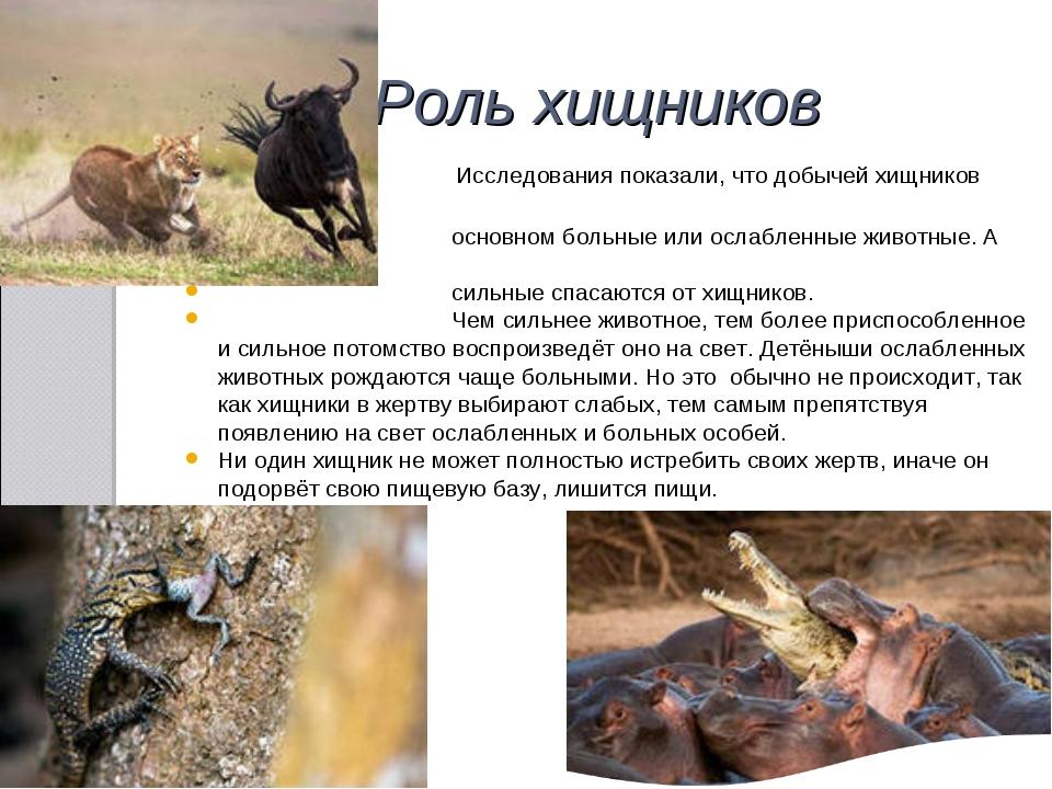 Роль хищников Исследования показали, что добычей хищников становятся в основн...