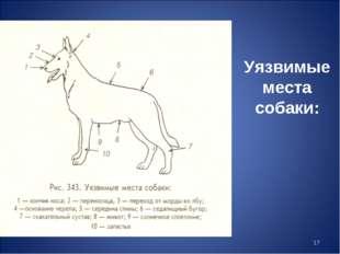 * Уязвимые места собаки: