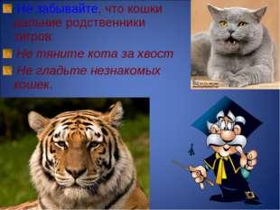 Не забывайте, что кошки дальние родственники тигров: Не тяните кота за хвост