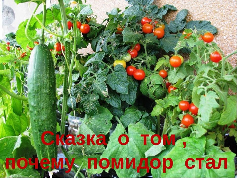 Раз овощи на грядке Собрались вечерком, Про местные порядки Поговорить ладком...