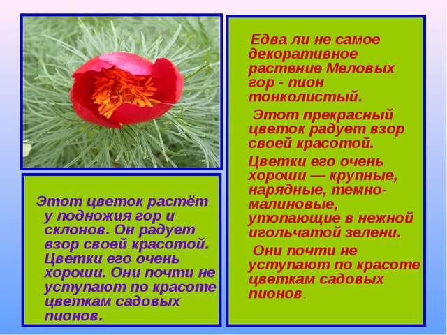 Этот цветок растёт у подножия гор и склонов. Он радует взор своей красотой....