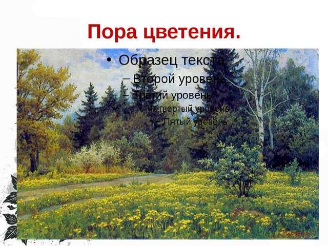 Пора цветения.