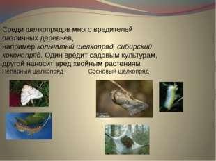 Среди шелкопрядов много вредителей различных деревьев, например кольчатый шел