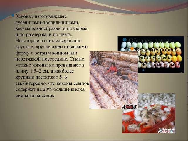 Коконы, изготовляемые гусеницами-прядильщицами, весьма разнообразны и по фор...