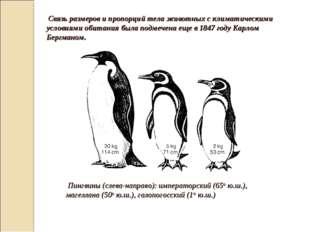 Связь размеров и пропорций тела животных с климатическими условиями обитания